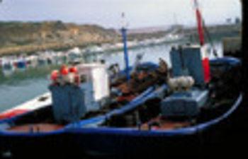 El Ministerio de Agricultura, Alimentación y Medio Ambiente aumenta en 1.000 toneladas la cuota de boquerón en el Golfo de Cádiz y Sur de Galicia. Foto: Ministerio de Agricultura, Alimentación y Medio Ambiente