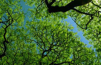 Los buenos datos se deben a la crisis económica y a las políticas ambientales (Aire By de la maldad. CC BY-NC-SA 2.0)