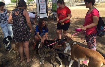 Primer encuentro canino de Albacete
