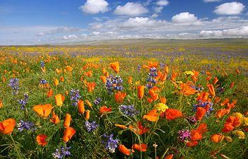 Buen tiempo - Soleado - Primavera