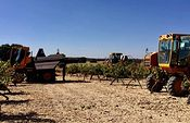 ASAJA CLM exige acciones contundentes que protejan a los productores frente a la subida de aranceles