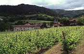 El Ministerio de Agricultura, Alimentación y Medio Ambiente informa al sector vitivinícola sobre las autorizaciones concedidas para nuevas plantaciones de viñedo. Foto: Ministerio de Agricultura, Alimentación y Medio Ambiente