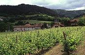 Ampliado el plazo para la presentación de solicitudes para las transferencias de derechos de plantación de viñedos. Foto: Ministerio de Agricultura, Alimentación y Medio Ambiente