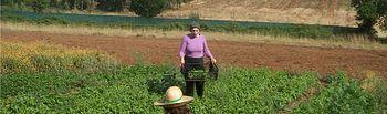 Huerto. Foto: Ministerio de Agricultura, Alimentación y Medio Ambiente