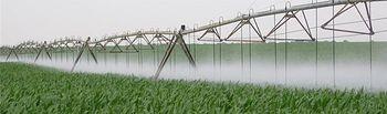 El ITAP publica los resultados de los ensayos de maíz realizados en la campaña de 2014