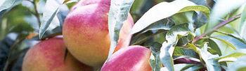 COAG reclama a la UE un ''nuevo sistema de gestión de crisis-grave de precios'' para el sector hortofrutícola. Foto: COAG.