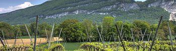 El Ministerio de Agricultura, Alimentación y Medio Ambiente publica la resolución sobre la aplicación del régimen de autorizaciones de plantaciones de viñedo en 2016. Foto: Ministerio de Agricultura, Alimentación y Medio Ambiente