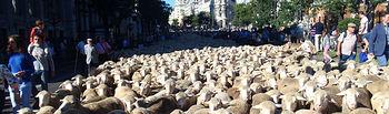 Más de 2000 cabezas de ganado y tres grupos folklóricos participan en la Fiesta de la Trashumancia que reivindica la actividad pastoril y ganadera. Foto: Ministerio de Agricultura, Alimentación y Medio Ambiente