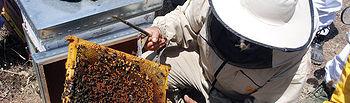 Jornada de apicultura.