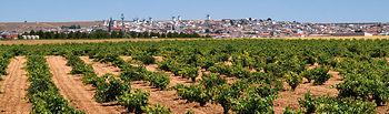 Vista de la localidad de Campo de Criptana (Ciudad Real) con sus viñedos y molinos característicos.