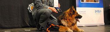jax, un perro condecorado por sus servicios relevantes (Foto Ministerio del Interior)