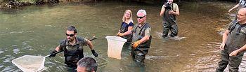 Muestreo de trucha, realizado con pesca eléctrica en el Río Mundo, dentro del término municipal de Liétor.