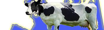 Ganaderos lácteos españoles, franceses y portugueses envían una carta conjunta a sus gobiernos para reclamar medidas urgentes que eviten el cierre de miles de explotaciones. Foto: COAG.
