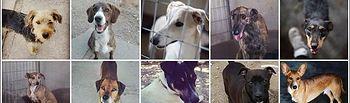 Los animales abandonados de Castilla La Mancha necesitan tu ayuda.