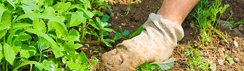 El Ministerio de Agricultura, Alimentación y Medio Ambiente establece las bases para subvenciones destinadas a facilitar el acceso a la financiación de las explotaciones agrarias. Foto: Ministerio de Agricultura, Alimentación y Medio Ambiente