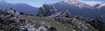 Autorizado el convenio de colaboración financiera entre el Organismo Autónomo Parques Nacionales y Castilla y León y Madrid en el Parque Nacional de la Sierra de Guadarrama. Foto: Ministerio de Agricultura, Alimentación y Medio Ambiente