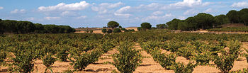 Alerta ante la reforma de la OCM del vino