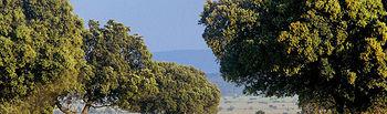 La superficie destinada en Castilla-La Mancha a la caza ocupa más de 7 millones de hectáreas, el 91,23% del total