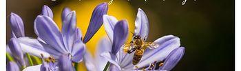 Efectos de la agricultura industrial y ecológica en las abejas