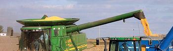 El agricultor que utilice algún producto transgénico deberá de mantener informado al fabricante, del mismo modo que el productor de semillas habrá de declarar al agricultor qué clase de ellas le vende. Foto: Recolección de maíz.
