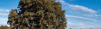 La riqueza botánica y faunística es uno de los grandes atractivos de los Campos de Montiel.
