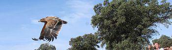 Los escolares castellano-manchegos aprenden cómo se recupera la fauna silvestre de la región.