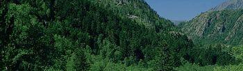 España, segundo país de la Unión Europea en superficie forestal con 27,7 millones de hectáreas. Foto: Ministerio de Agricultura, Alimentación y Medio Ambiente