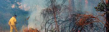 En lo que va de año se han registrado en Castilla-La Mancha un total de 282 incendios forestales.