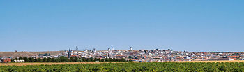 La campaña de vendimia 2010 finaliza con 20 millones de hectolitros de buena calidad, entre vino y mosto, en C-LM