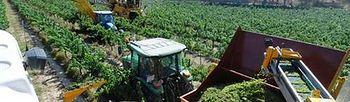Sector agrario. Foto: EFE.