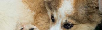 Alguno de los perros en adopción de Emperrados