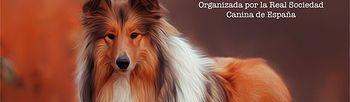 Cartel XXXV Exposición Internacional Canina de Otoño de la RSCE