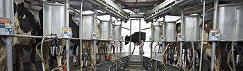 El Ministerio de Agricultura, Alimentación y Medio Ambiente homologa el nuevo contrato-tipo de suministro de leche cruda de vaca por los ganaderos. Foto: Ministerio de Agricultura, Alimentación y Medio Ambiente