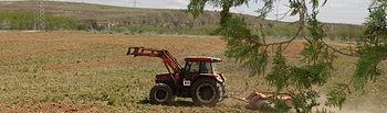 La Renta Agraria en términos corrientes experimenta un aumento del 7,7% en la primera estimación para 2013. Foto: Ministerio de Agricultura, Alimentación y Medio Ambiente