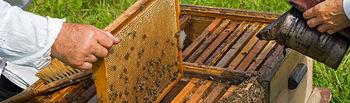 El Ministerio de Agricultura, Alimentación y Medio Ambiente publica las bases para la concesión de ayudas a la investigación en apicultura. Foto: Ministerio de Agricultura, Alimentación y Medio Ambiente
