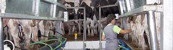 COAG exige al Gobierno un mediador de contratos lácteos para la negociación de precios que acabe con la indefensión y ruina de los ganaderos. Foto: COAG.