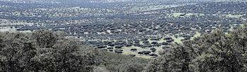 Parque Natural 'Valle de Alcudia y Sierra Madrona'.