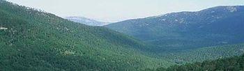 AVE. Foto: Ministerio de Medio Ambiente, y Medio Rural y Marino