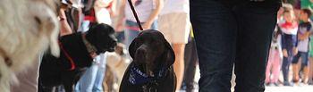 III Feria de la Adopción y Protección Animal de Albacete