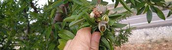 El 30 de noviembre finaliza el periodo de contratación del seguro agrario para almendro y aceituna de almazara.