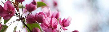 La primavera es la temporada más temida por los alérgicos.