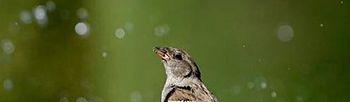 Pájaro. Foto: EFE