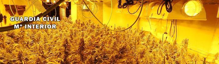 Plantas de marihuana en una vivienda de Casarrubios del Monte (Toledo)