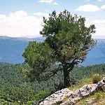 Vista de la Sierra de Alcaraz desde el Pico de La Almenara, el más alto de la provincia de Albacete con 1.796 metros de altura.