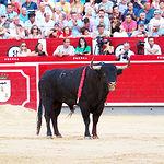 Primer toro - José Garrido - 2 - 10-09-16