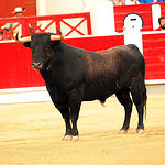 David Mora - Su segundo toro-2 - Feria Taurina Albacete 14-09-16 - Para web