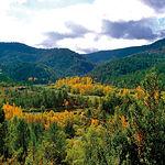 La variedad y abundancia de vegetación de los bosques de la Serranía de Cuenca transforma la superficie del terreno en una auténtica piel de leopardo.