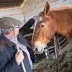 """Cuadra de caballos de Juan Cantos """"Pimpi de Albacete"""""""