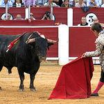 """""""Morisquito"""", de la ganadería de Daniel Ruiz, premiado al Toro más Bravo en los Premios Taurinos Samueles 2013."""