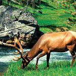 El cambio climático alterará la actividad de algunas especies, tanto en su migración como en su reproducción.